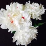 FullSizeRenderflower pic