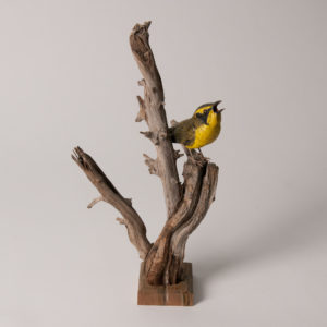 Bird_002 - Copy